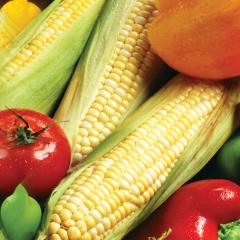 yellow-corn-air-dried-dehydrated-main